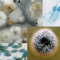 Informazioni sul rischio biologico