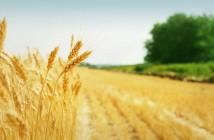 bando-agricoltura-emilia-romagna