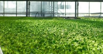 elenco-proroga-prodotti-fitosanitari-2016