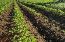 braccianti-agricoli-circolare-inps