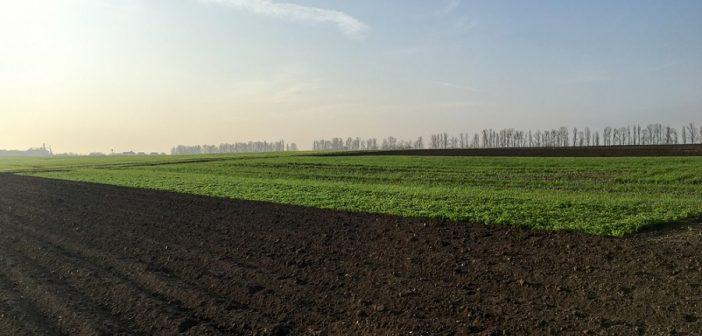 esonero-inps-imprenditori-agricoli