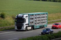 ispezioni-trasporto-animali-rapporto