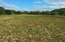 vendita-banca-nazionale-terre-agricole