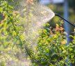 prodotti-fitosanitari-per-uso-non-professionale
