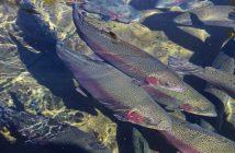 gestione-trasporto-pesci-manuale-normativa