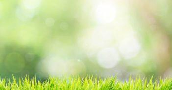fitosanitari-norme